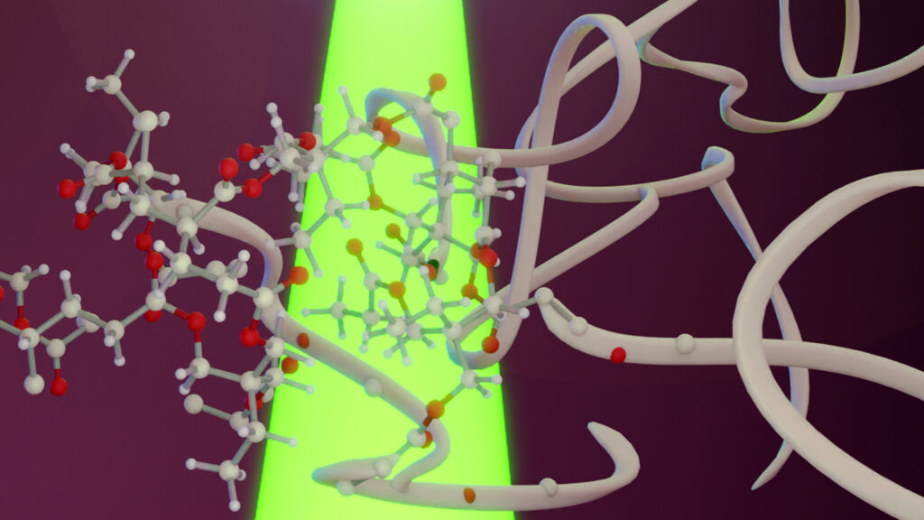 BioLEC Researchers Discover New Photoactivation Mechanism for Polymer Production